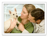 Pet Insurance:Health Plans for Fido and Fluffy