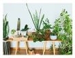 Low-Light Plants for Cheering Up Your Home